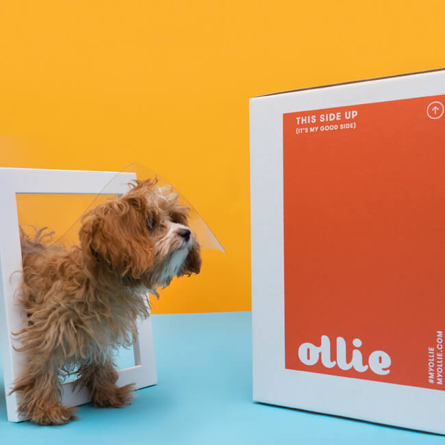 ollie dog food
