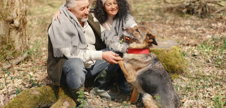 best german shepherd breeders